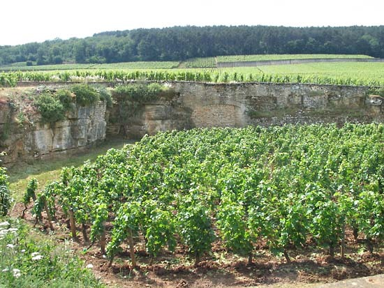 Burgun_wine_route_chambertin_beze