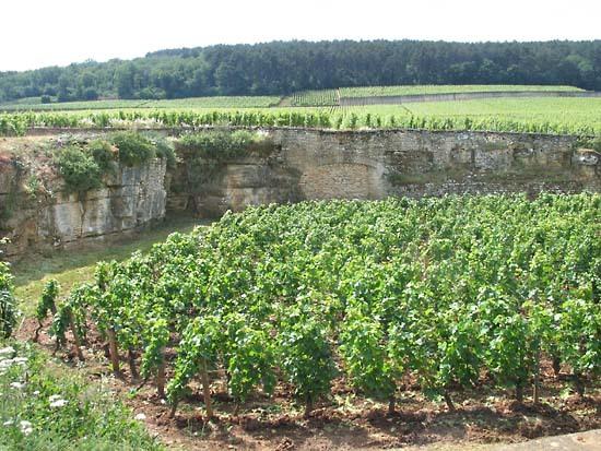 Burgun_wine_route_chambertin_beze