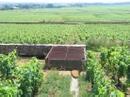 Burgun_wine_route_chevalier_montrac