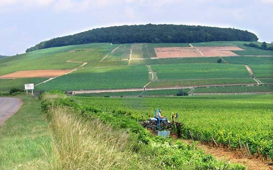 Burgun_wine_route_corton