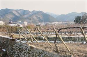 Katsunuma_wine_vignes_montagnes