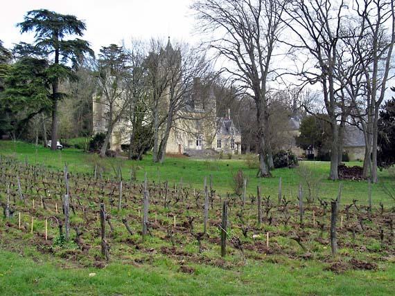1roches_chateau_vignes