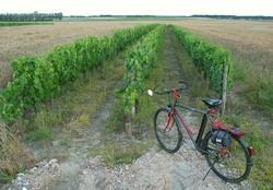 1_3rows_vineyard_loire
