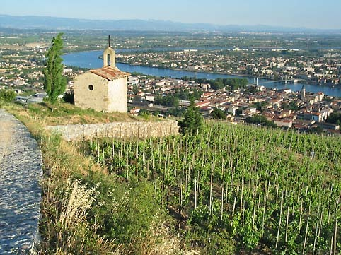 Rhone_vineyards