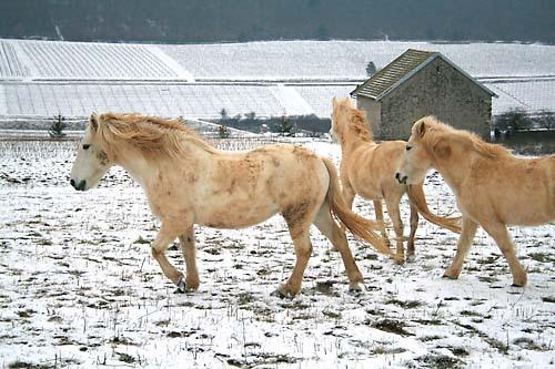 Svt_chevaux2